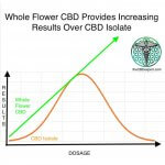 Why Whole Flower CBD is Preferred Over CBD Isolate