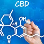 PTSD and CBD | The Endocannabinoid System and Cannabis