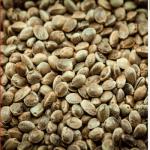 Hurry! European Seeds for Your 2021 Hemp Farm