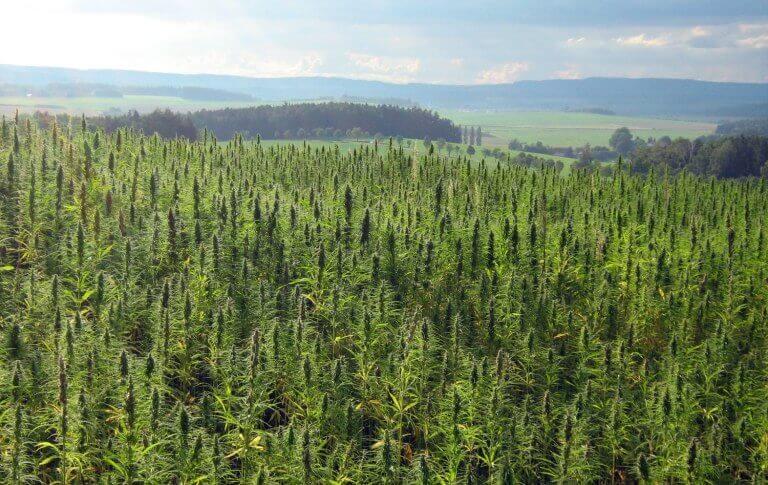 hemp farming consulting